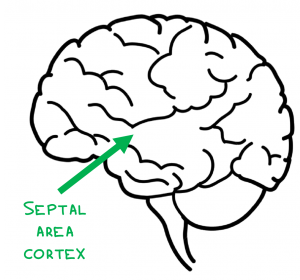 Image showing septal area in a brain